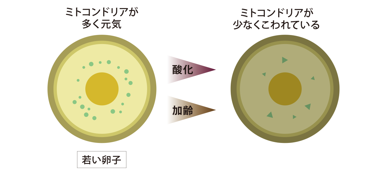 卵子の質が悪い例